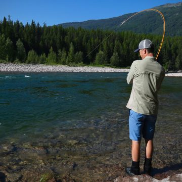 Flathead River Fishing Report 8-9-18