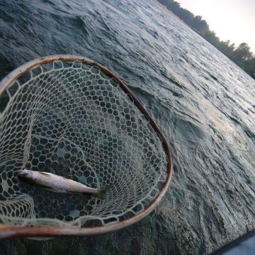Flathead River Fishing Report 8-26-18